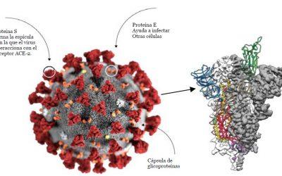 Elementos para entender la pandemia de COVID-19