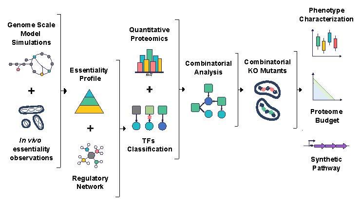 ReProMin: un método eficiente para tener bacterias eficientes